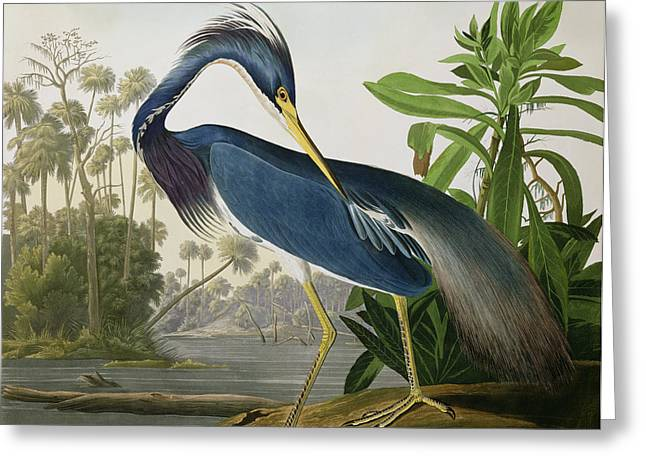 Wild Animals Paintings Greeting Cards - Louisiana Heron Greeting Card by John James Audubon
