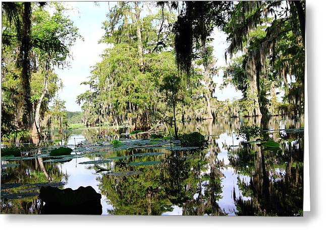 Moss Green Pyrography Greeting Cards - Louisiana Reflections Greeting Card by Linda Alexander
