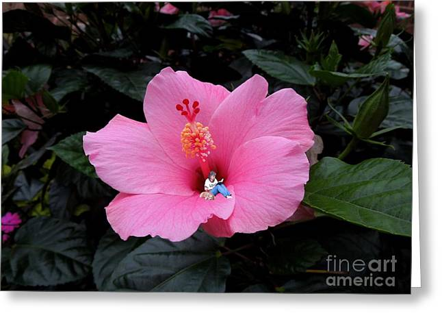 Lounging in a Hibiscus Greeting Card by Renee Trenholm