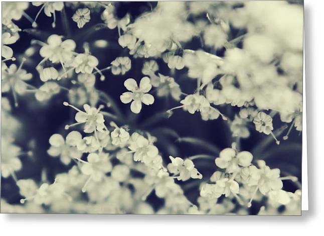 Queen Annes Lace Greeting Cards - Love and Lace Greeting Card by Laurie Search
