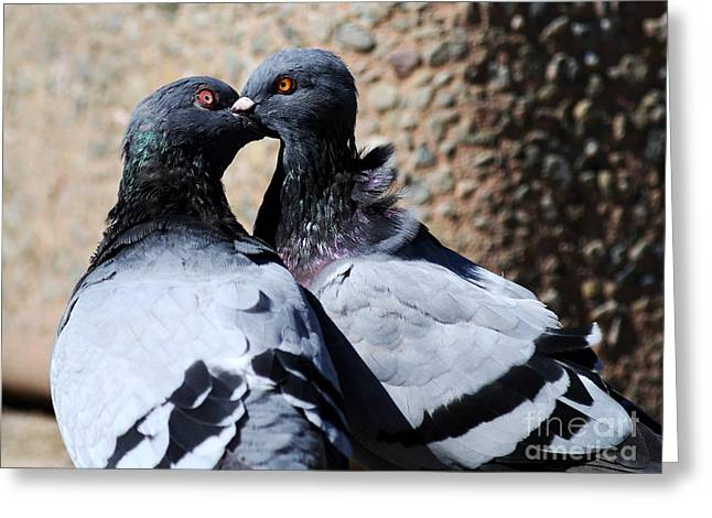 Love Birds Greeting Card by Wingsdomain Art and Photography