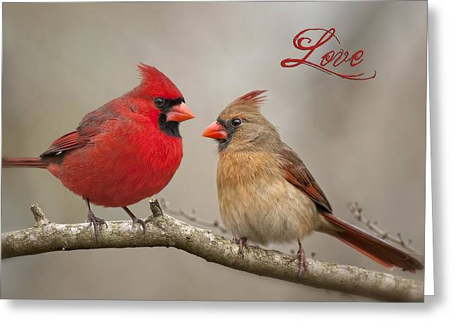 Love Greeting Card by Bonnie Barry