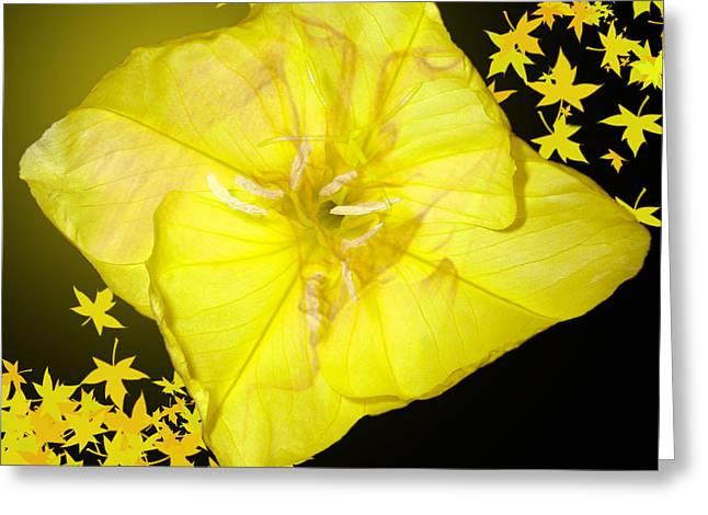 Floral Digital Art Digital Art Greeting Cards - Love Glow Greeting Card by Torie Tiffany