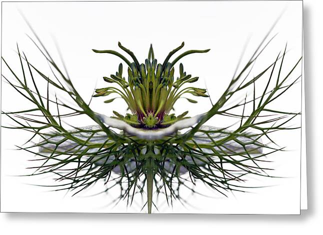 Love In A Mist Greeting Card by Jean Noren