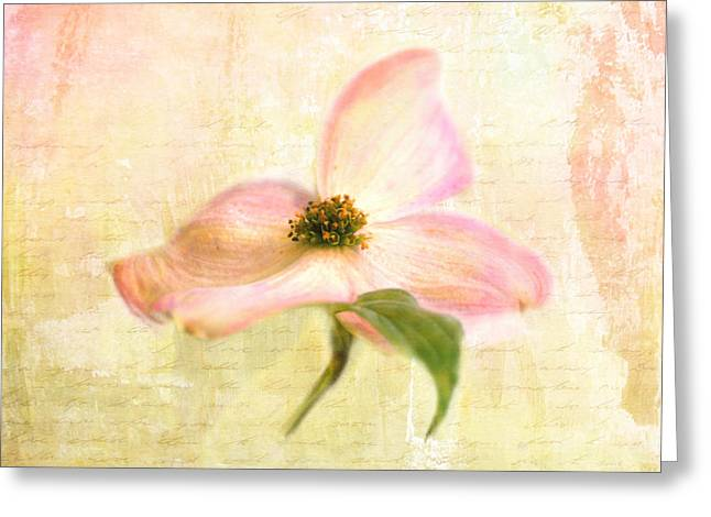 Artistic Photography Greeting Cards - Love Letter VI Greeting Card by Jai Johnson
