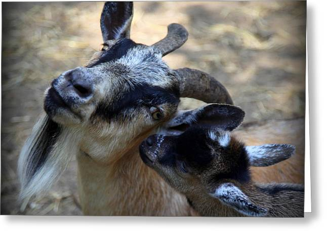 Animals Love Greeting Cards - Love On a Farm Greeting Card by Karen Wiles