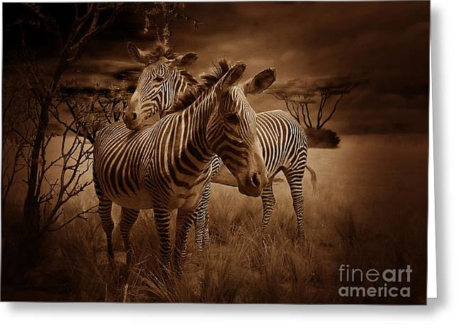Zebra Picture Prints Greeting Cards - Love Season III - African Dream II  Greeting Card by Xueling Zou