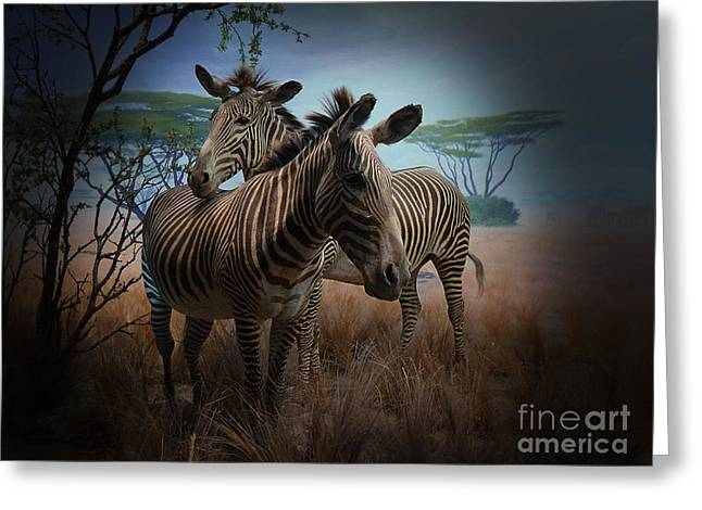 Zebra Picture Prints Greeting Cards - Love Season III - African Dream III Greeting Card by Xueling Zou