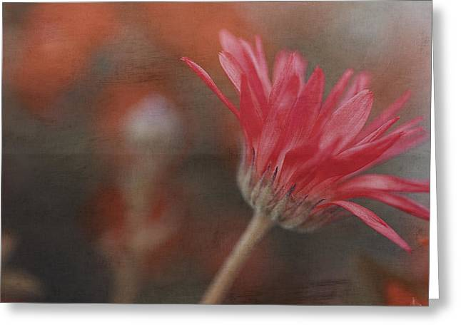 Floral Photos Greeting Cards - Love Tiptoes In Greeting Card by Bonnie Bruno