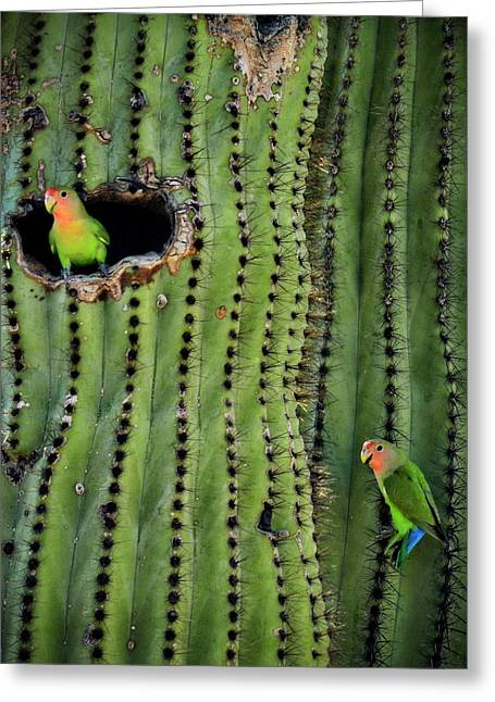 Lovebirds And The Saguaro  Greeting Card by Saija  Lehtonen