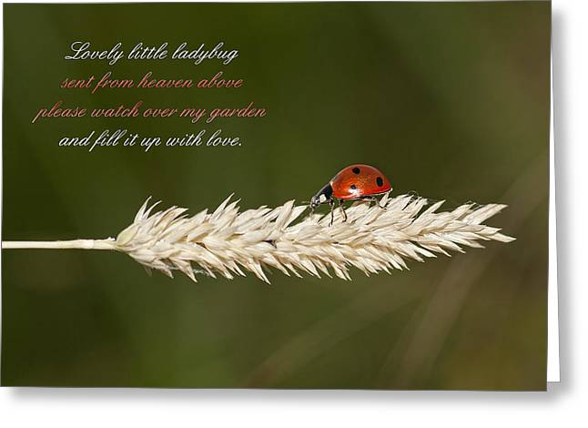 Helpful Greeting Cards - Lovely little Ladybug Greeting Card by Bonnie Barry