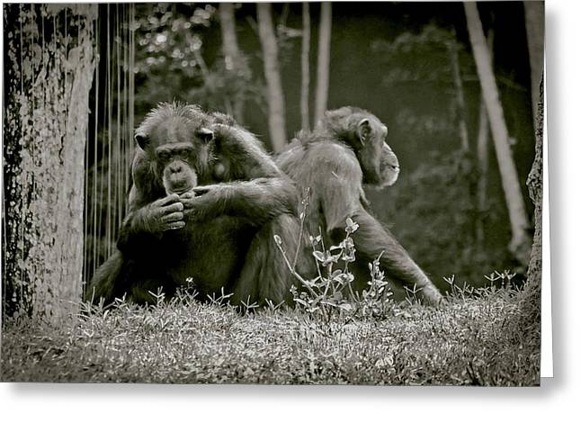 Spats Greeting Cards - Lovers Spat Amongst Primates Greeting Card by DigiArt Diaries by Vicky B Fuller