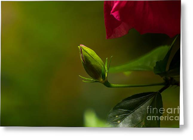 Venura Herath Greeting Cards - Loves Bloom Greeting Card by Venura Herath