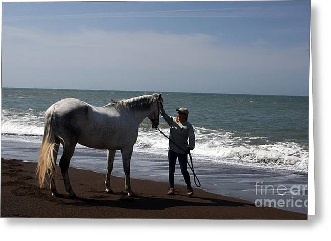 Horse Owner Greeting Cards - Loves Touch Greeting Card by Juan Romagosa