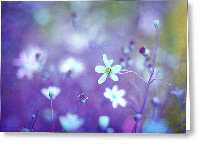 Wildflower Photos Greeting Cards - Lovestruck in Purple Greeting Card by Amy Tyler