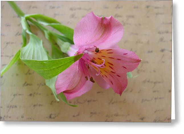 Peruvian Lily Greeting Cards - Loving You Greeting Card by Kathy Bucari