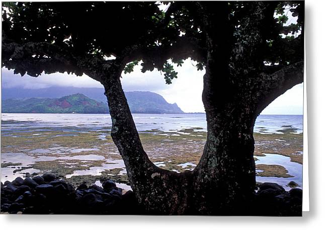 Beach Photos Greeting Cards - Low Tide and the Tree Greeting Card by Kathy Yates
