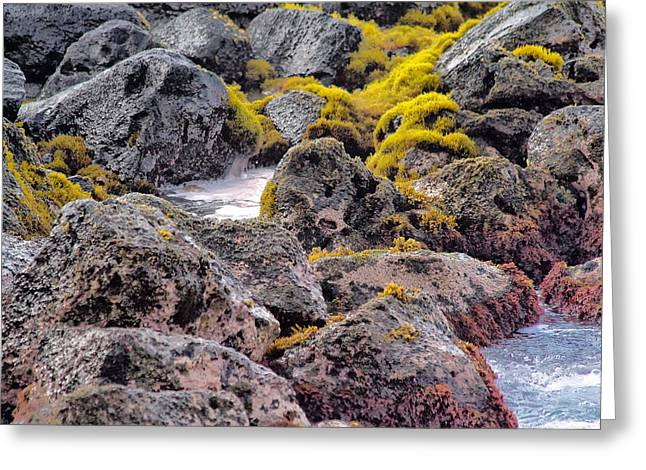 Low Tide Greeting Card by Roger Mullenhour