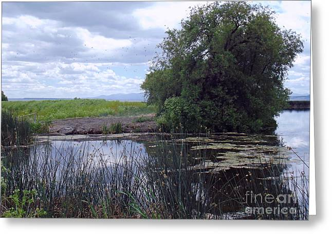 Willow Lake Greeting Cards - Lower Klamath Wildlife Refuge Greeting Card by Methune Hively