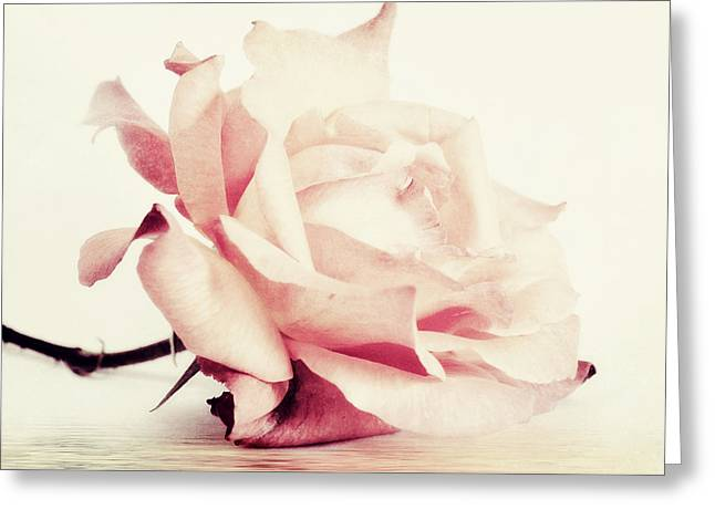Rose Photos Greeting Cards - Lucid Greeting Card by Priska Wettstein
