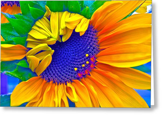 Sunny Digital Art Greeting Cards - Lucky Greeting Card by Gwyn Newcombe