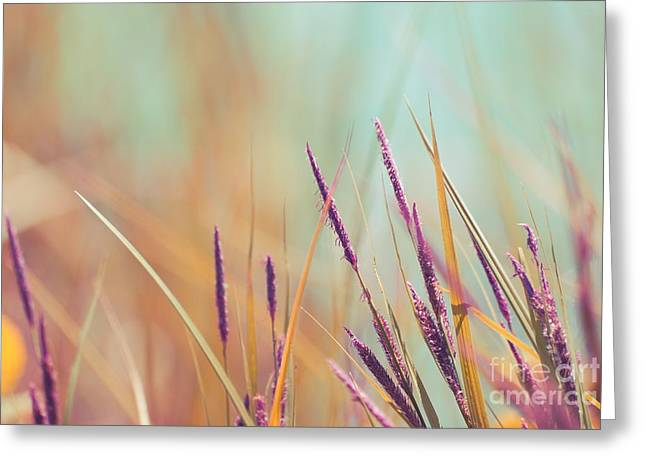 Flora Photography Greeting Cards - Luminis - s07b Greeting Card by Variance Collections