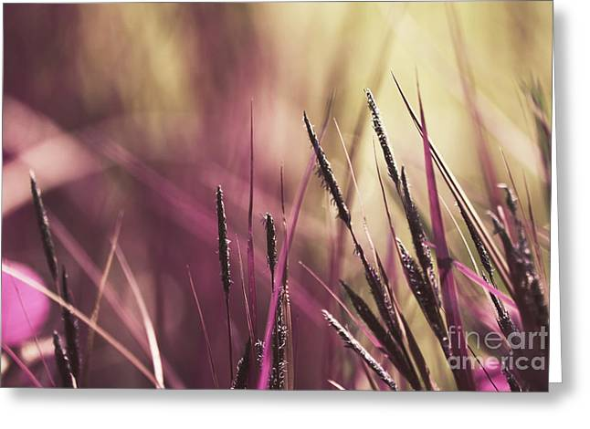 Flora Photography Greeting Cards - Luminis 02 - s11a Greeting Card by Variance Collections