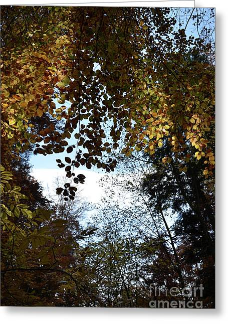 Autumn Sheets Greeting Cards - Luminous Forest 1 Greeting Card by Bruno Santoro