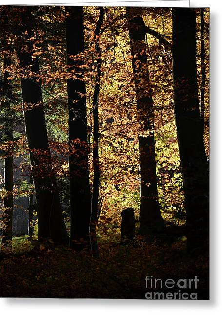 Autumn Sheets Greeting Cards - Luminous Forest 3 Greeting Card by Bruno Santoro