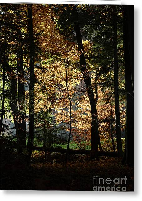 Autumn Sheets Greeting Cards - Luminous Forest 4 Greeting Card by Bruno Santoro