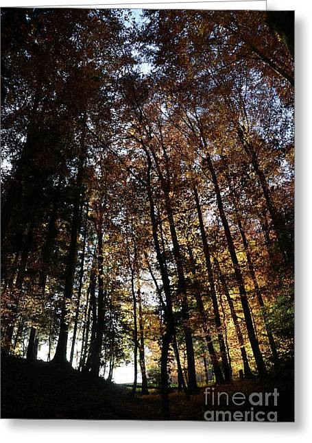 Autumn Sheets Greeting Cards - Luminous Forest 5 Greeting Card by Bruno Santoro
