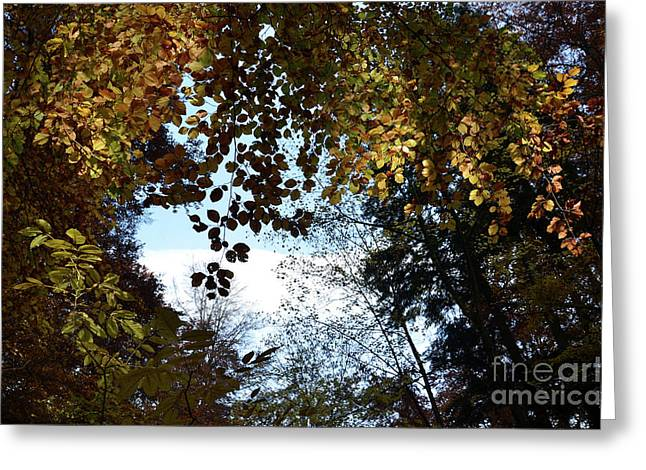Autumn Sheets Greeting Cards - Luminous Forest Greeting Card by Bruno Santoro