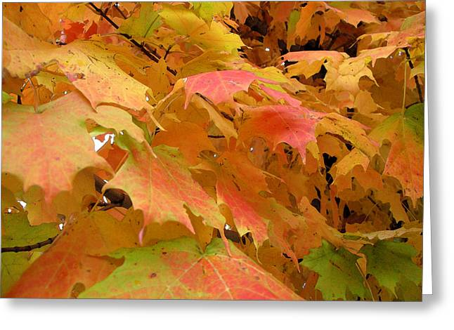 Autum Abstract Greeting Cards - Luminous Maple Leaves 2 WC  Greeting Card by Lyle Crump