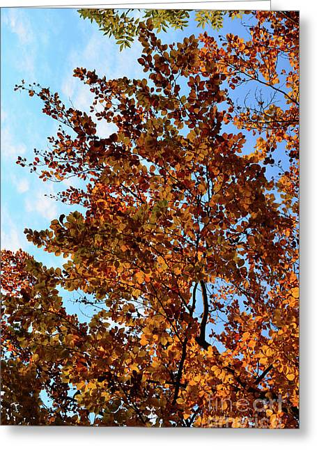 Autumn Sheets Greeting Cards - Luminous Tree Greeting Card by Bruno Santoro