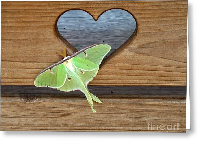 Floral Photographs Pyrography Greeting Cards - Luna Moth in Love Greeting Card by The Kepharts
