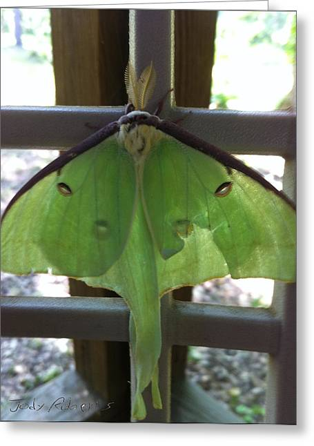 Luna Pastels Greeting Cards - Luna Moth Greeting Card by Jody Roberts