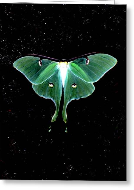 Luna Greeting Cards - Luna Moth Greeting Card by John Foote