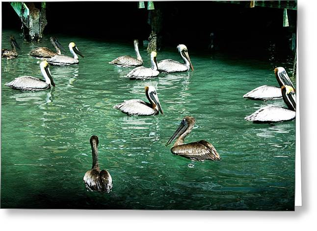 Seabirds Digital Art Greeting Cards - Lunch Crowd Greeting Card by Ellen Heaverlo