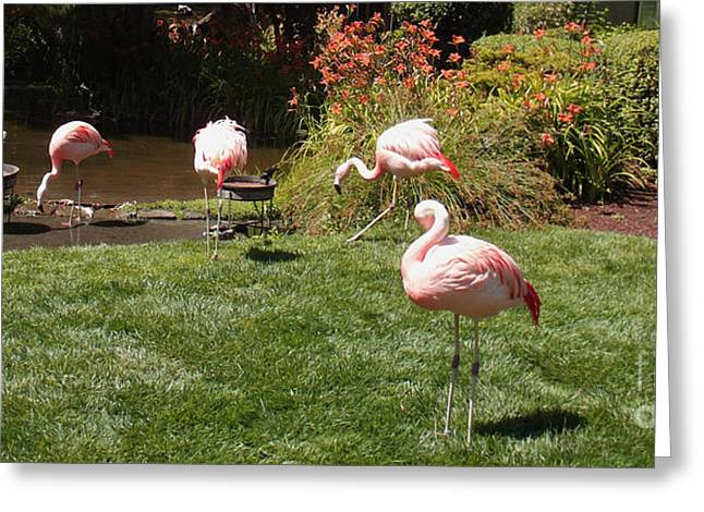 Pink Flamingo Nature Photo Greeting Cards - Lunch Meeting Greeting Card by Methune Hively