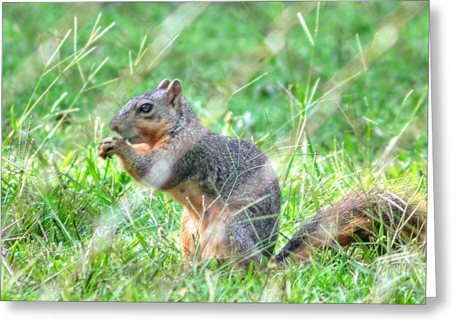 Fox Squirrel Greeting Cards - Lunch Time Greeting Card by Ester  Rogers
