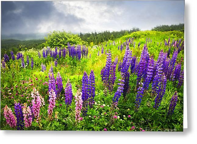 Lupin flowers in Newfoundland Greeting Card by Elena Elisseeva