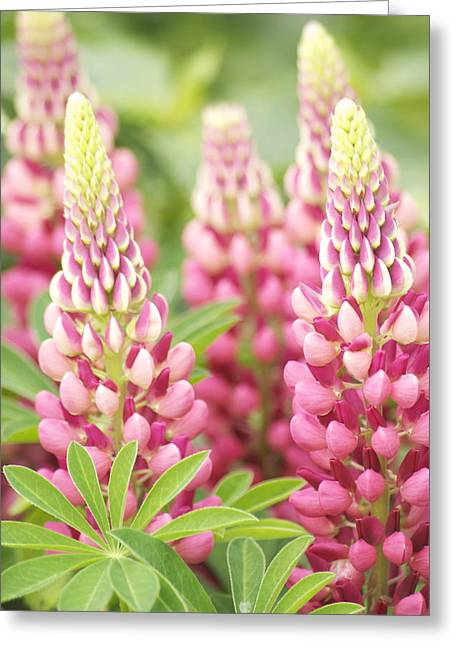 Belle Isle Greeting Cards - Lupine Greeting Card by Michael Peychich