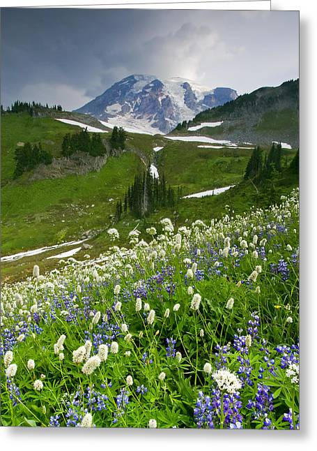 Mt. Rainier Greeting Cards - Lupine Storm Greeting Card by Mike  Dawson