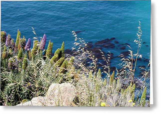 Pfeiffer Beach Greeting Cards - Lupines in Big Sur Greeting Card by PJQandFriends Photography