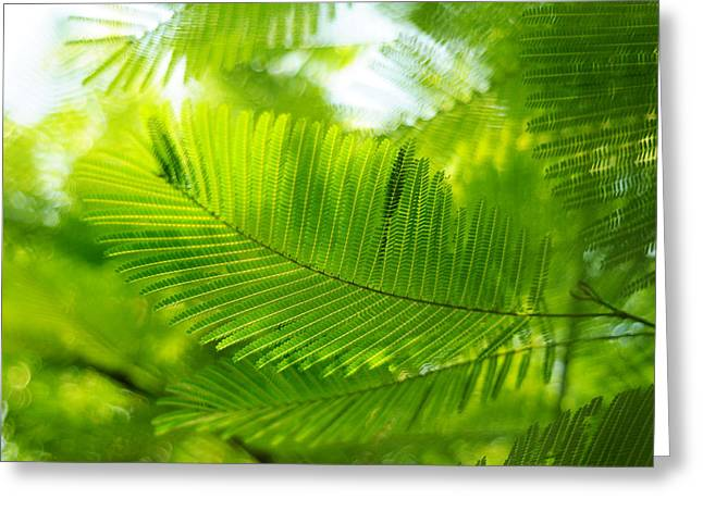 Luscious Green Light. Acacia Tree Greeting Card by Jenny Rainbow