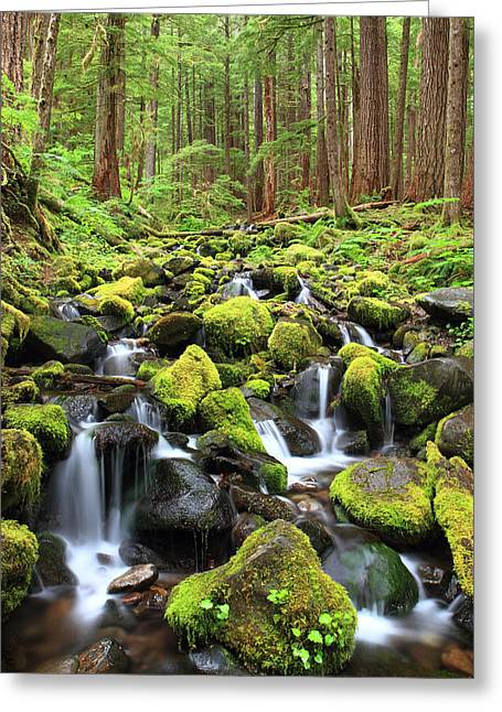 Lush Creek Olympic National Park Greeting Card by Pierre Leclerc Photography