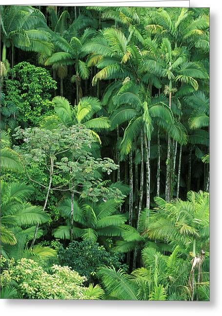 Hamakua Greeting Cards - Lush Rainforest Greeting Card by Ron Dahlquist - Printscapes