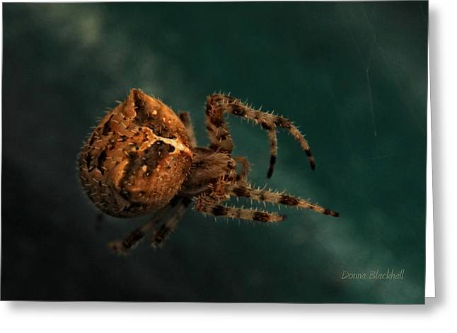 Big Spider Greeting Cards - Lying In Wait Greeting Card by Donna Blackhall