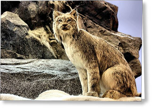 Wildcats Greeting Cards - Lynx Greeting Card by Kristin Elmquist