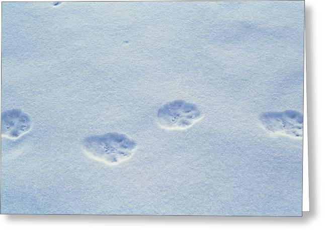 Cat Paw Print Greeting Cards - Lynx Paw Prints Greeting Card by Alan Sirulnikoff